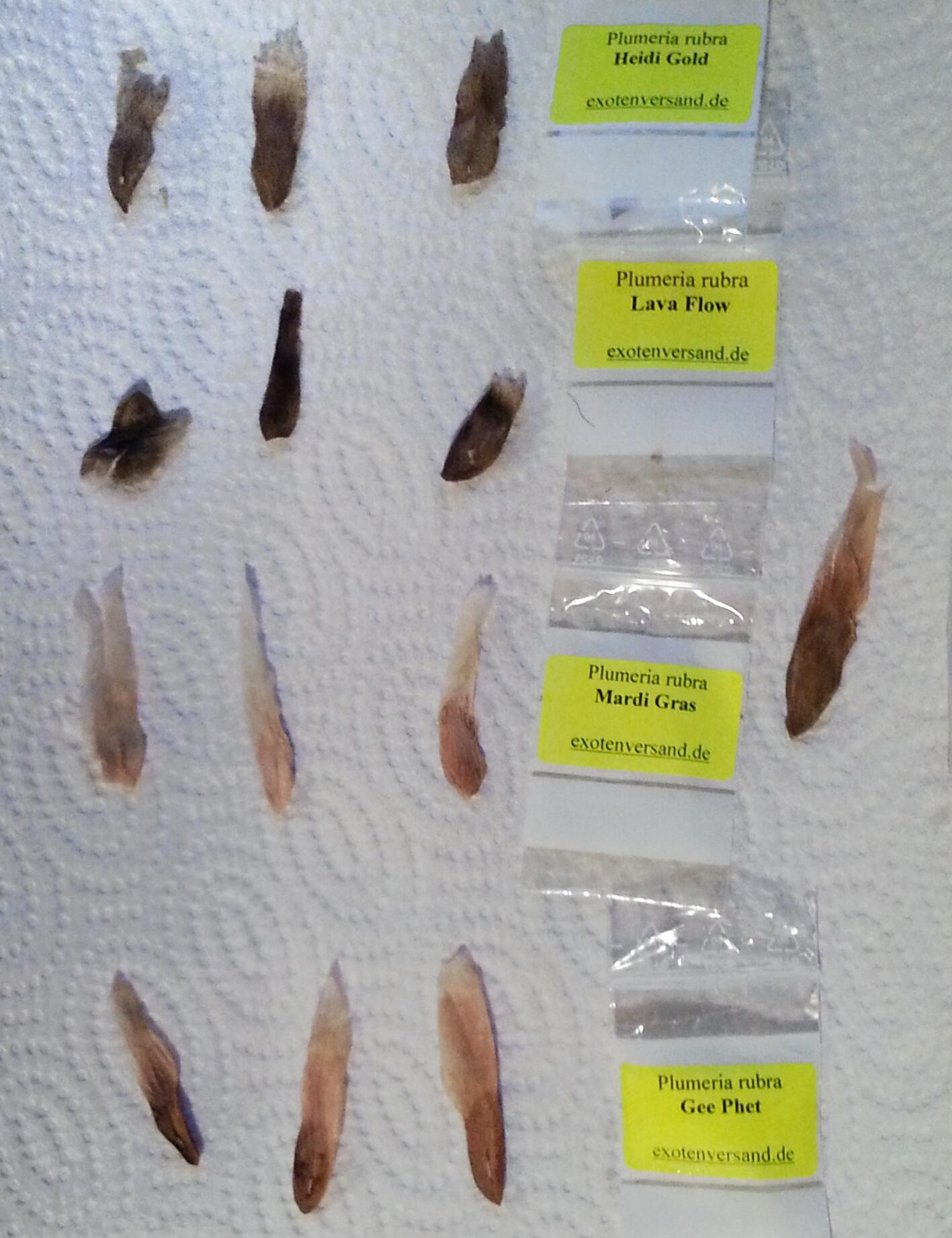 Das Bild zeigt die verschiedenen Samen auf Küchenpapier mit Beschriftungstütchen